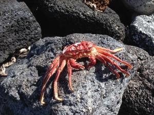 I found this very calm crab sitting on a rock... it took me moment to realize that he wasn't alive!