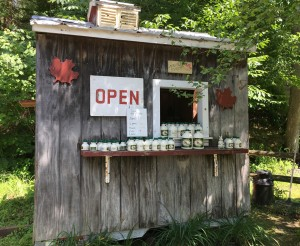 Lots of opportunities to purchase maple syrup at roadside stands